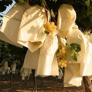 bolsa de papel para uvas