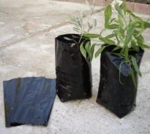 bolsa-para-plantar-olivos-y-frutales-medidas-18-x-30-cm-200-unidades-3110170___481427871579494