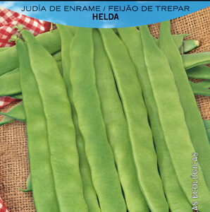 JUDIA DE ENRAME HELDA