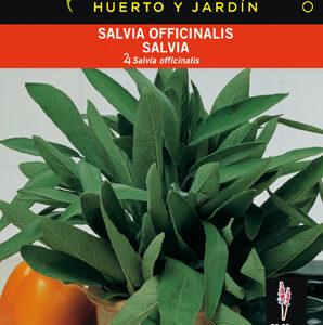 SALVIA OFFIICINALIS