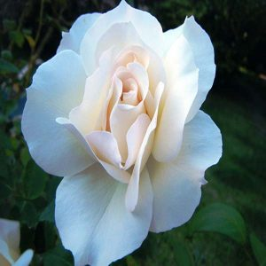 rosal-gran-nord