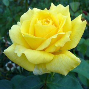 rosal-landora