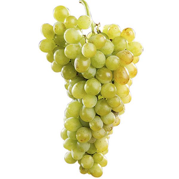 Uva de mesa rosetti blanca en maceta ud comprar online - Variedades de uva de mesa ...