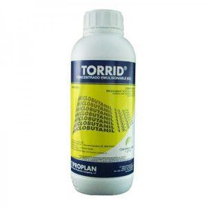torrid-1l