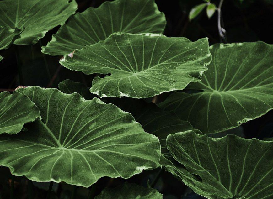 leaf-318743_1280