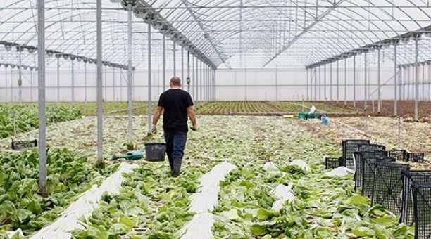 29704_l_agricultor_en_invernadero_