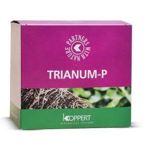 TRIANUM P